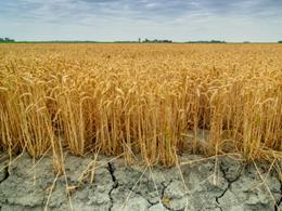 Ilustracja do informacji: ARiMR - Rolniku, zabezpiecz gospodarstwo przed suszą
