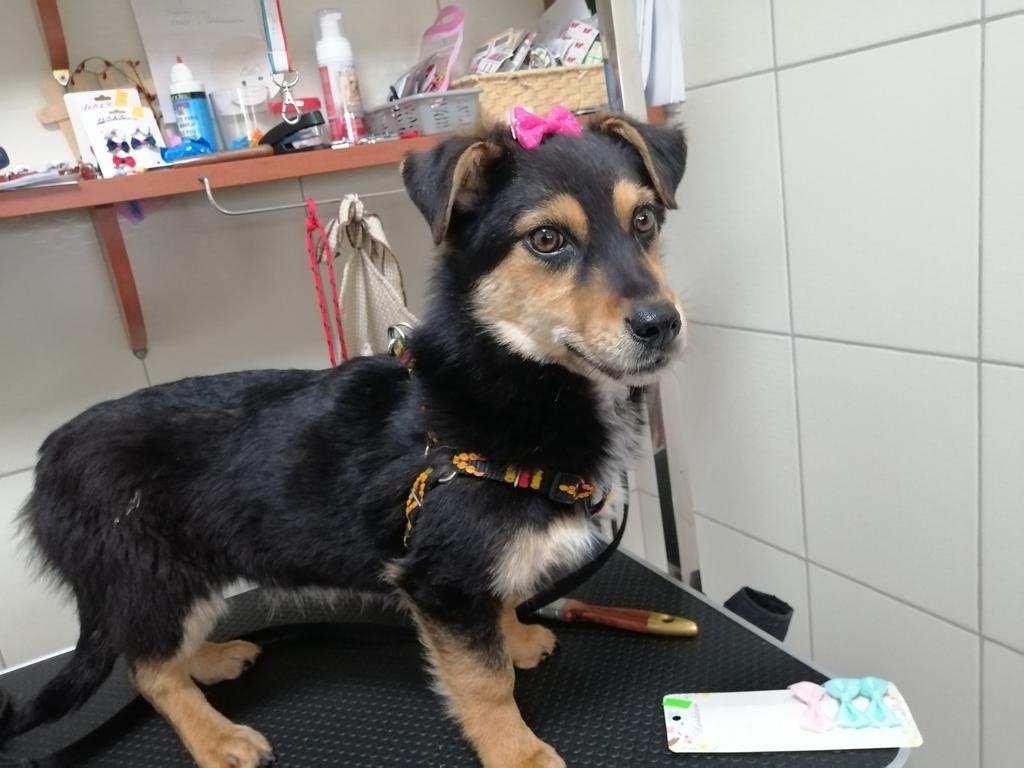 Miniatura zdjęcia: Dora - psiak do adopcji